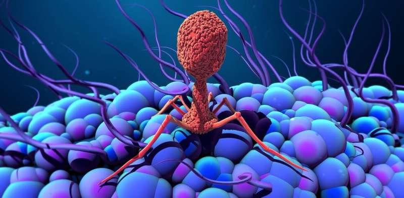 In defence of viruses