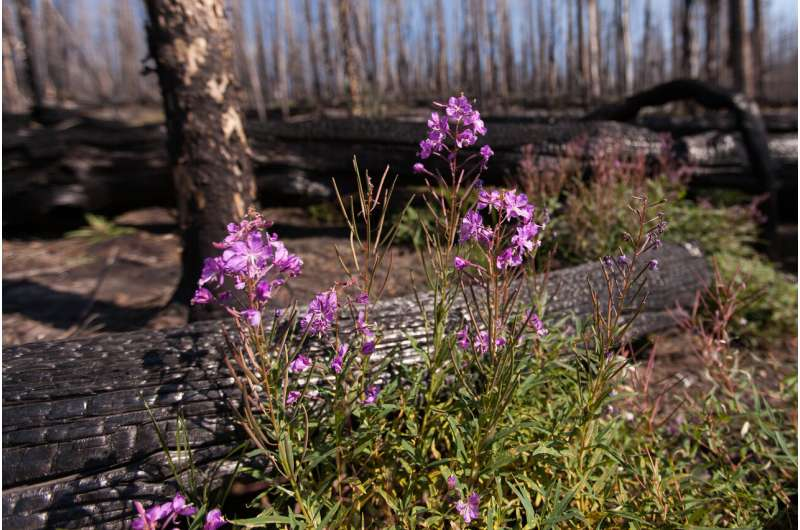 In fire-prone West, plants need their pollinators -- and vice versa