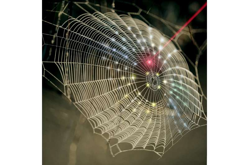Innovation spins spider web architecture into 3D imaging technology