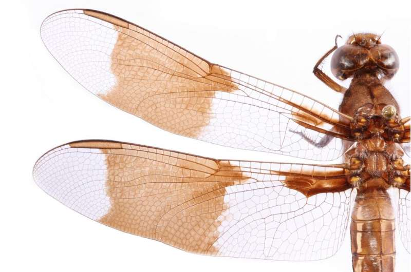 Insect wings inspire new ways to fight superbugs