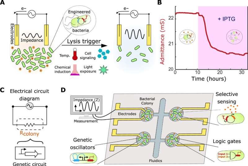 Interfacing gene circuits with microelectronics through engineered population dynamics
