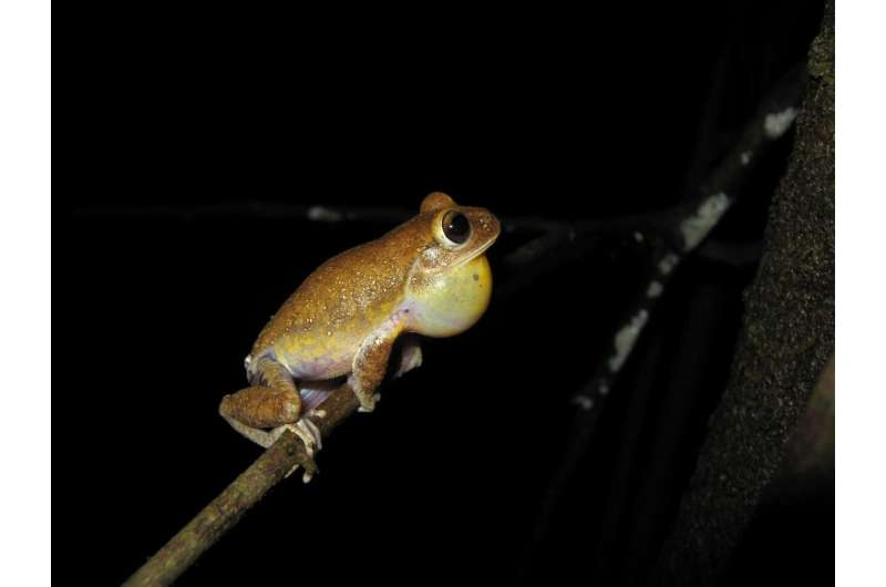 In the Cerrado, topography explains the genetic diversity of amphibians more than land cover