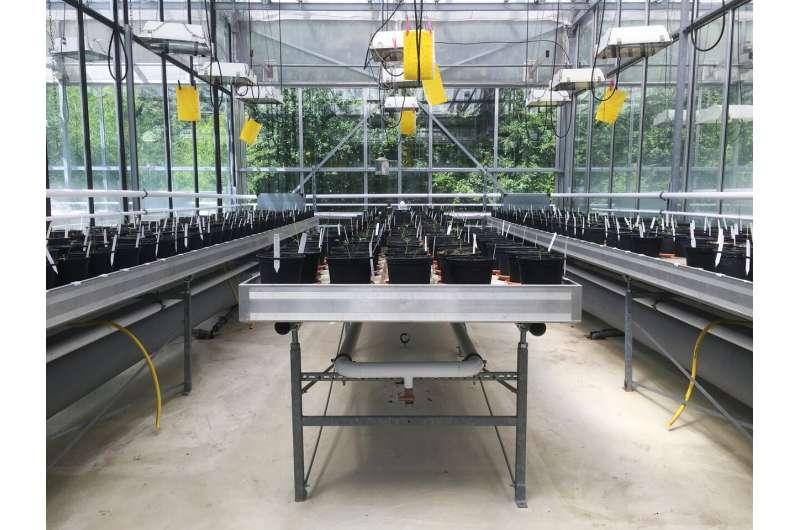 Invasional meltdown in multi-species plant communities