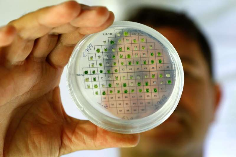 Israeli scientists say they have used algae to produce hydrogen