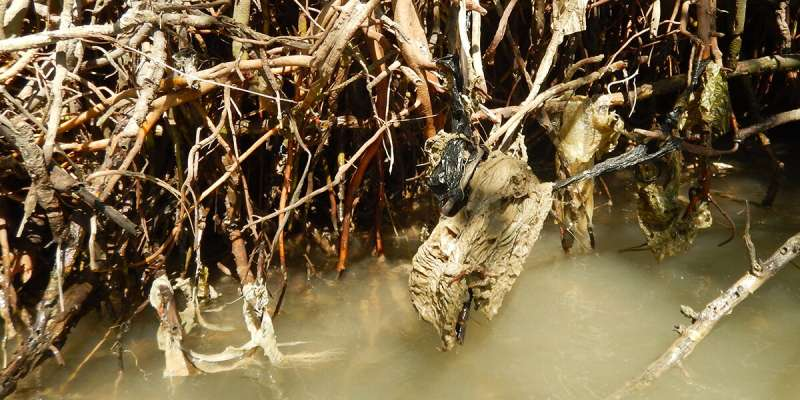 Java's protective mangroves smothered by plastic waste