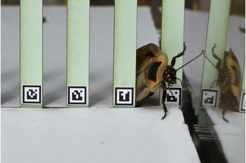 Jitterbug: Roaches and robots shake it to transition between movements in tricky terrain