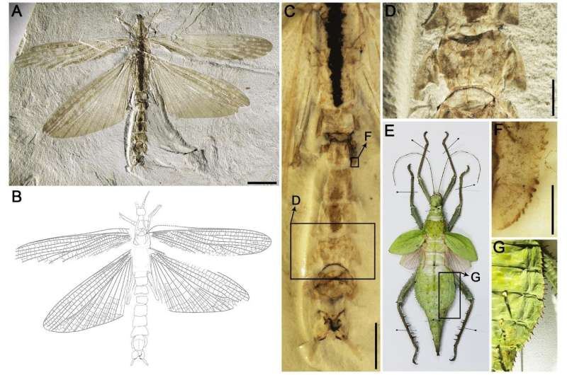 Jurassic stick insect performed mimicry to defend against predators