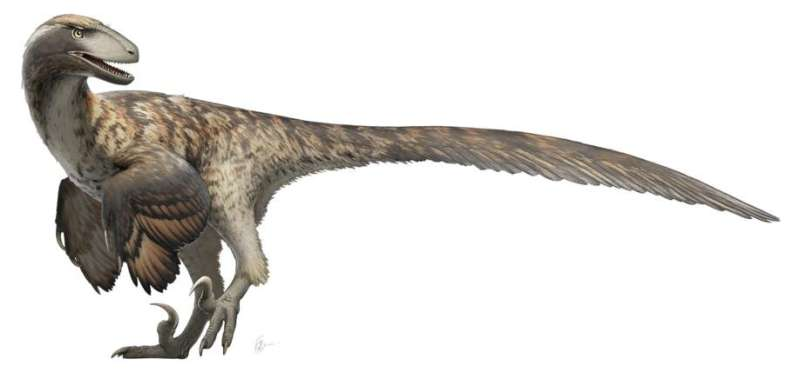 Jurrassic Park got it wrong: Research indicates raptors didn't hunt in packs