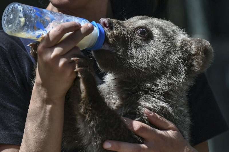 Keeping rescue bears fed is an expensive endeavour—adult bears eat two tonnes of food a day