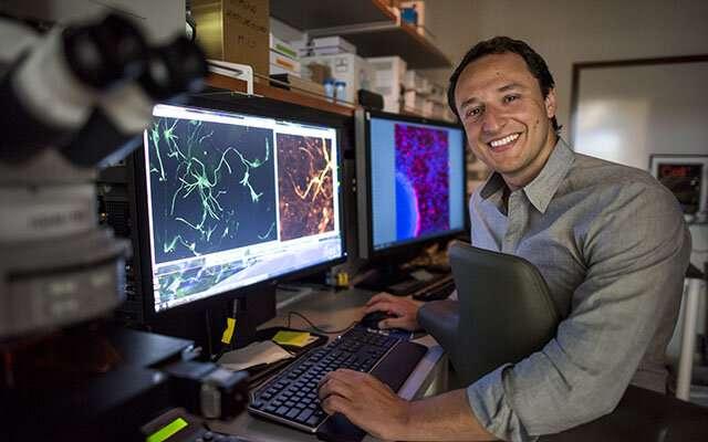 Lab-grown human brain organoids mimic an autism spectrum disorder, help test treatments