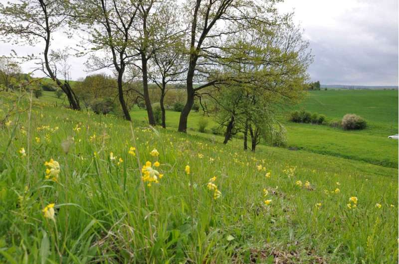 Land management in forest and grasslands: How much can we intensify?