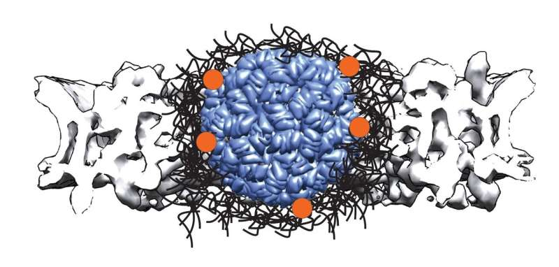 Large molecules need more help to travel through a nuclear pore into the cell nucleus
