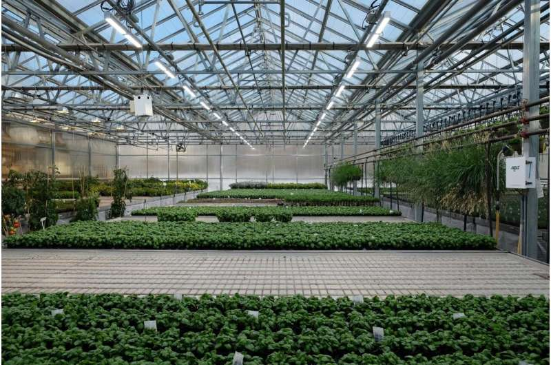 LED lighting in greenhouses helps but standards are needed