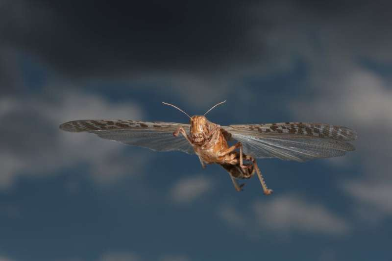 Lessons on how to effectively tackle insect invasions