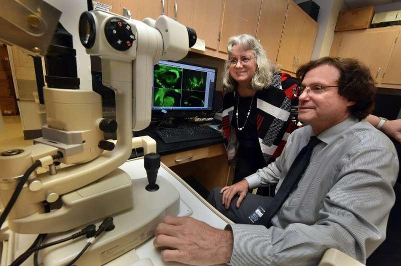 Lipid helps heal the eye's frontline protection