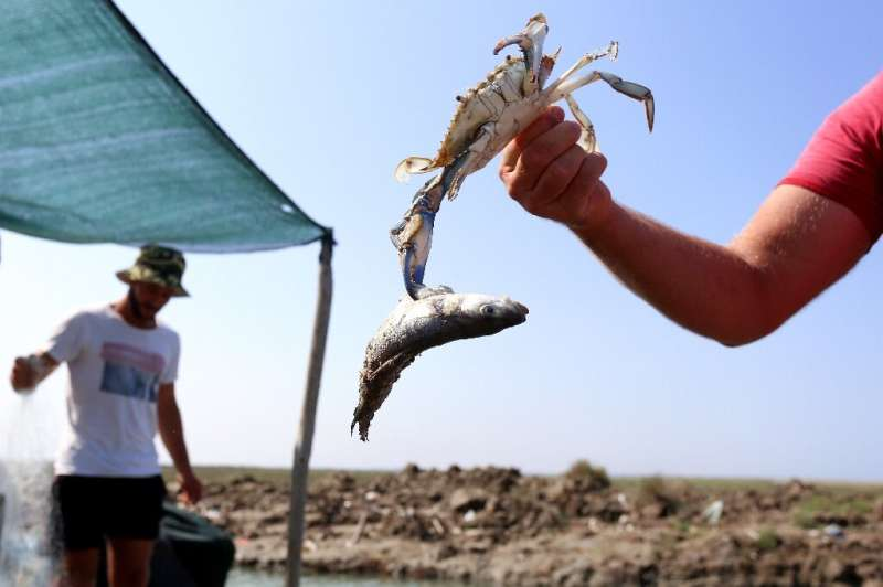 Local fishermen are left with boatloads of seafood they can't sell—one kilogramme of crab is worth 40 euro cents compared to 14