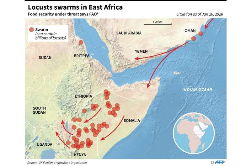 Locust plague in East Africa