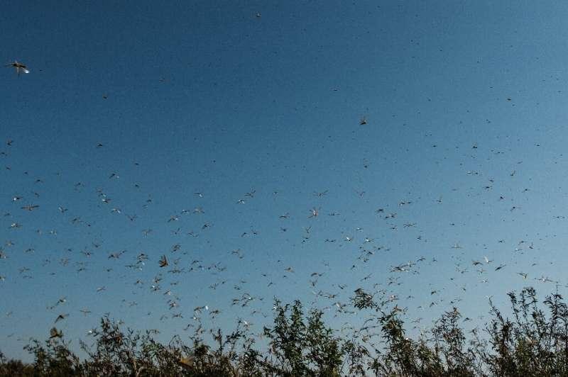 Locusts arrived in South Sudan this week after hitting Ethiopia, Somalia, Kenya, Djibouti, Eritrea, Tanzania, Sudan and Uganda