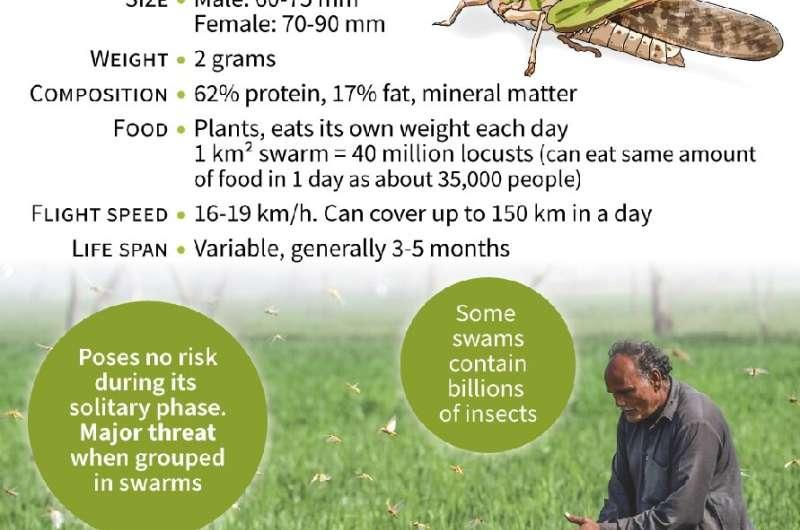 Locust swarms destroy Pakistan crops