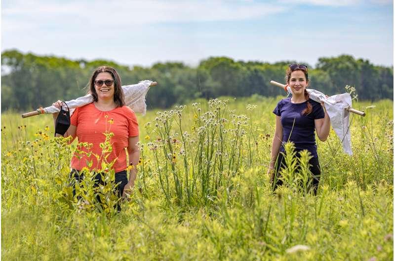 Lone Star ticks in Illinois can carry, transmit Heartland virus