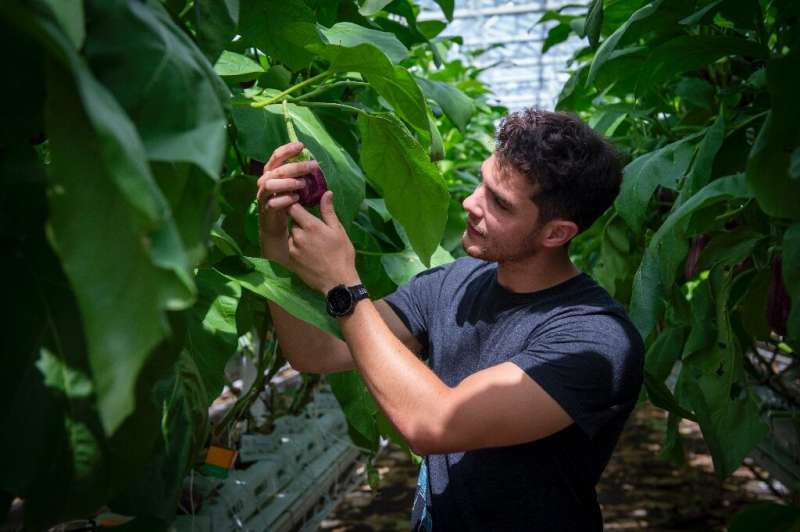 Lufa Farms spokesman Thibault Sorret shows off vegetables grown at what it says is the world's largest commercial rooftop greenh