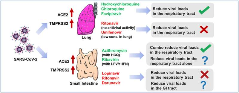 Lung distribution of antiviral drugs affects their performance in COVID-19 treatment