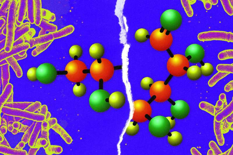 Making tuberculosis more susceptible to antibiotics