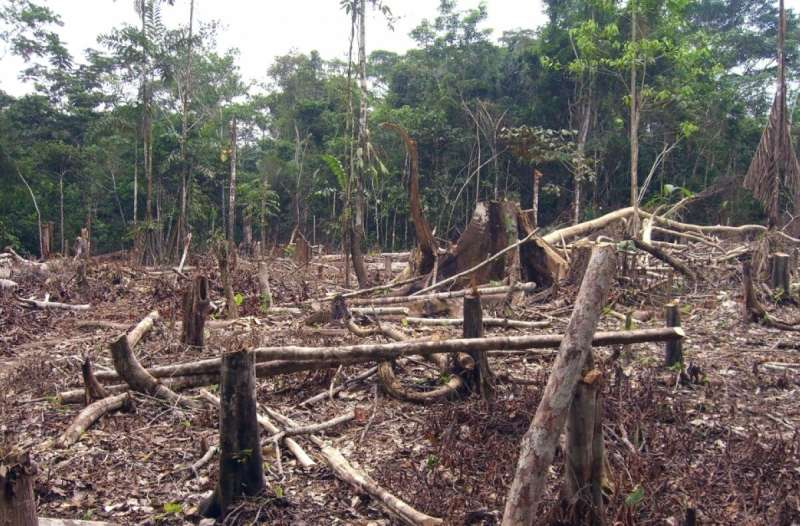Malaria in the Amazon increases with deforestation