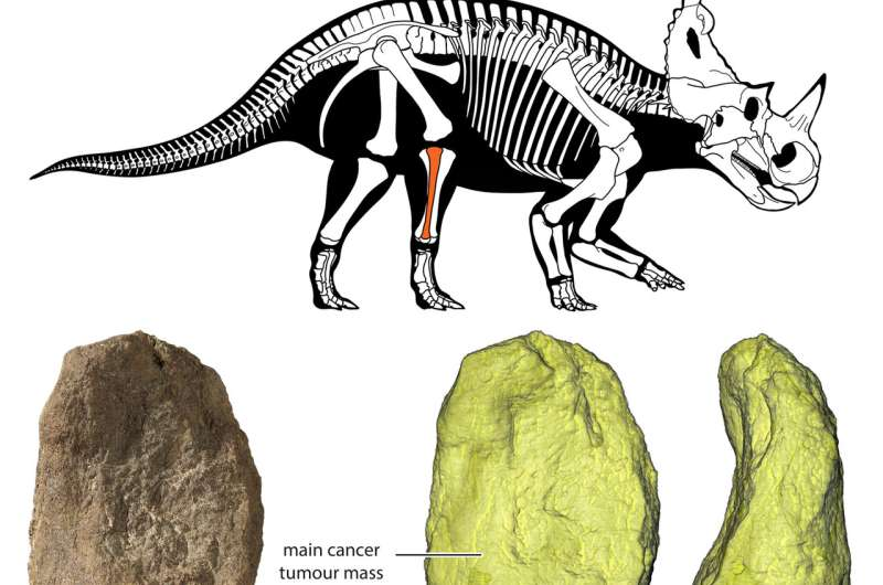 Malignant cancer diagnosed in a dinosaur for the first time
