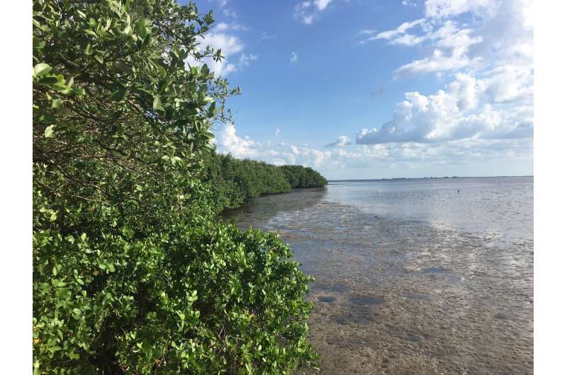 Mangrove trees won't survive sea-level rise by 2050 if emissions aren't cut