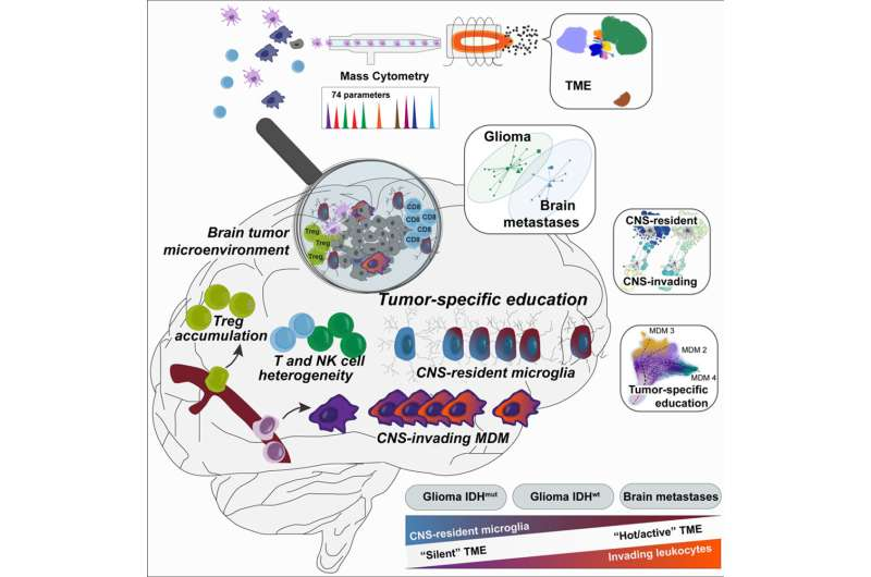 Mapping immune cells in brain tumors