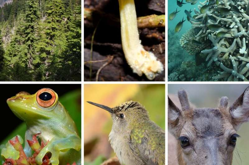 Marine species are outpacing terrestrial species in the race against global warming