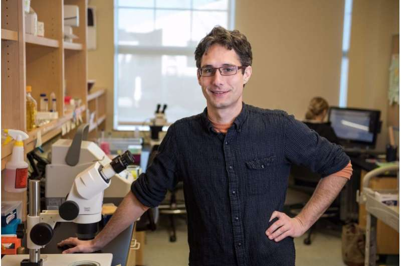 MDI biological scientists identify pathways that extend lifespan by 500%