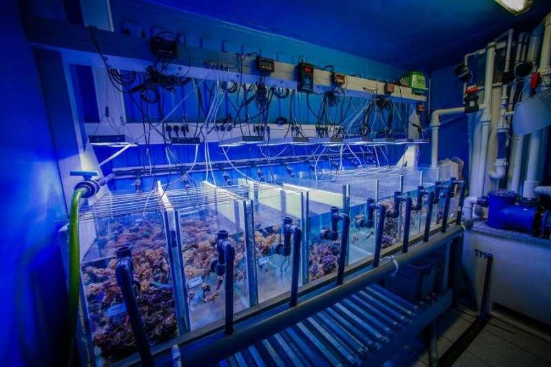 Metagenomics reveals distinct microbiotypes in the giant clams Tridacna maxima