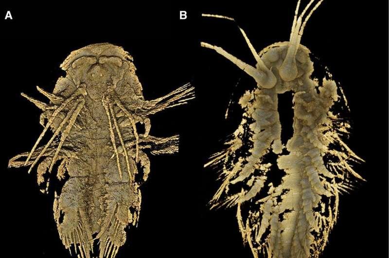 MicroCT reveals detailed head morphology of arthropod, Leanchoilia illecebrosa