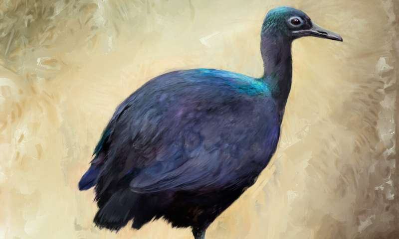 Microscopic feather features reveal fossil birds' colors and explain why cassowaries shine