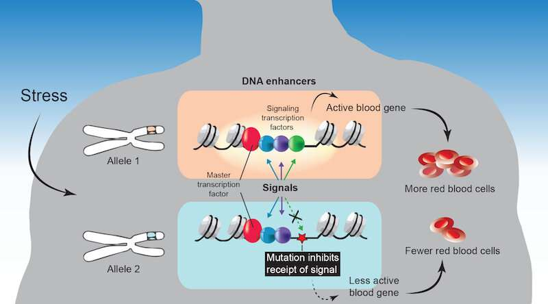 Missed signals? A new way we vary from each other biologically