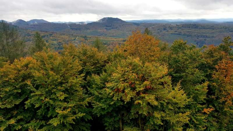 Mixed-species tree stands adapt better than pure stands