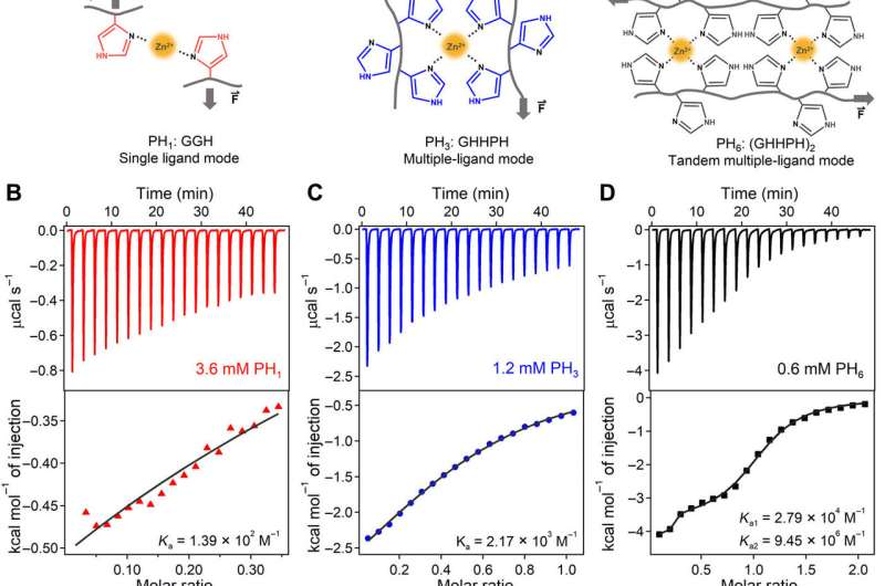 Molecular engineering metal coordination interactions for strong, tough and fast-recovery hydrogels.