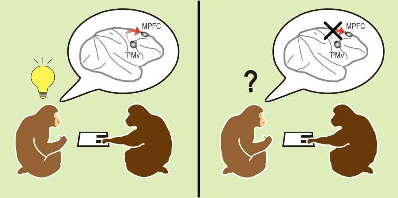Monkey see others, monkey do: How the brain allows actions based on social cues