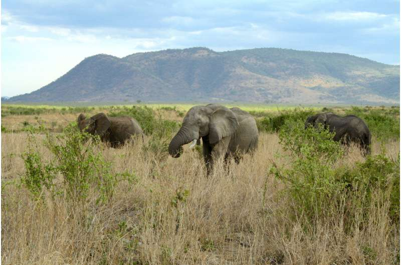 More ecosystem engineers create stability, preventing extinctions