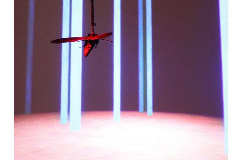 Moths' flight data helps drones navigate complex environments