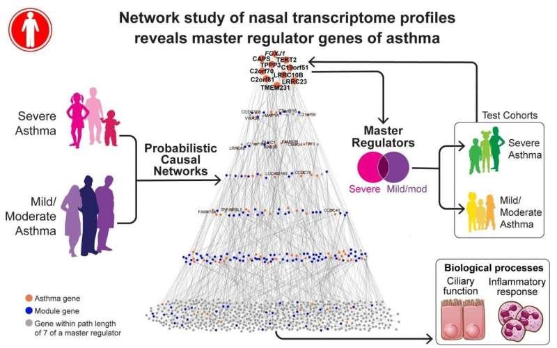 Mount Sinai researchers identify master regulator genes of asthma