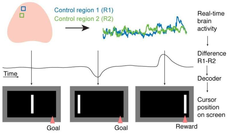 Mouse-controlled mouse helps researchers understand intentional control