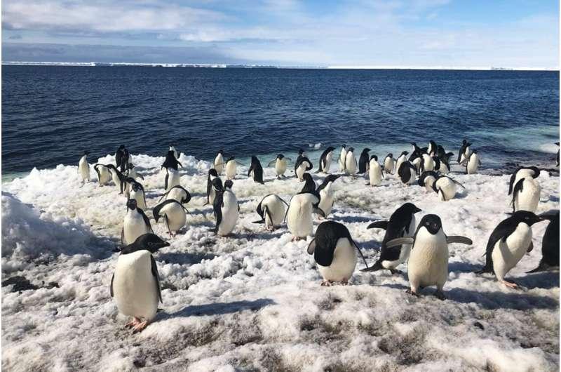 Multi-drone system autonomously surveys penguin colonies