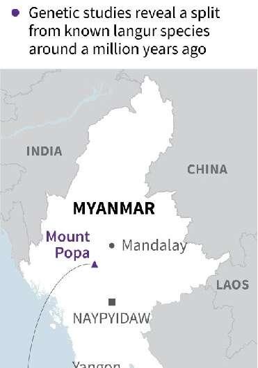 Myanamar monkey discovery