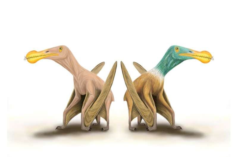 Naked prehistoric monsters! Evidence that prehistoric flying reptiles probably had
