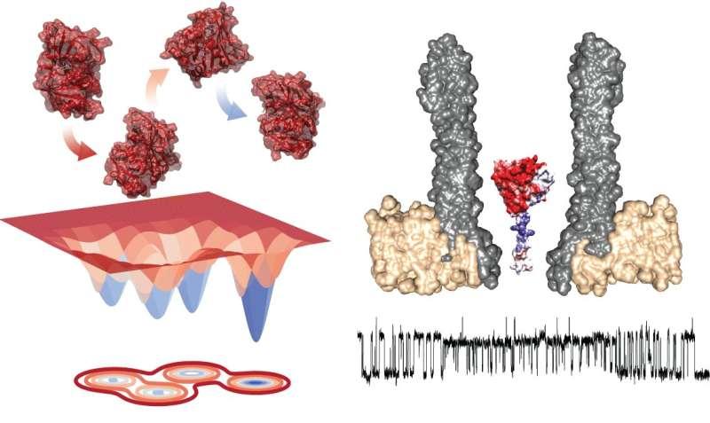 Nanopore reveals shape-shifting enzyme linked to catalysis