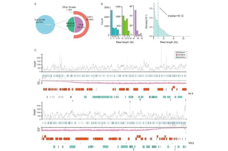 Nanopore sequencing of African swine fever virus