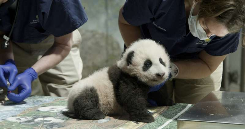 National Zoo extends panda deal with China through 2023